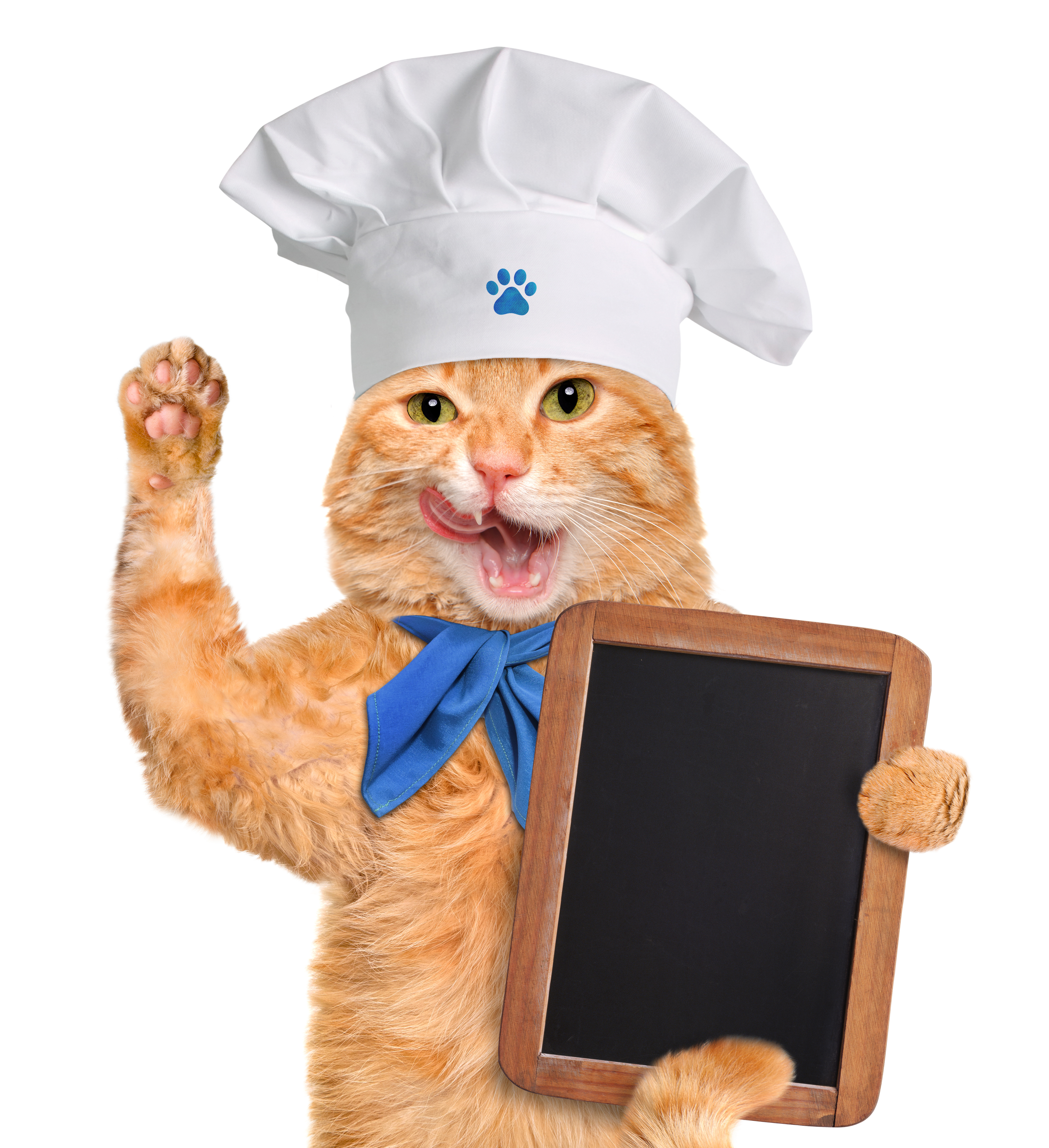 An image of a cat with a chalk board and a hat on, rating best cat food